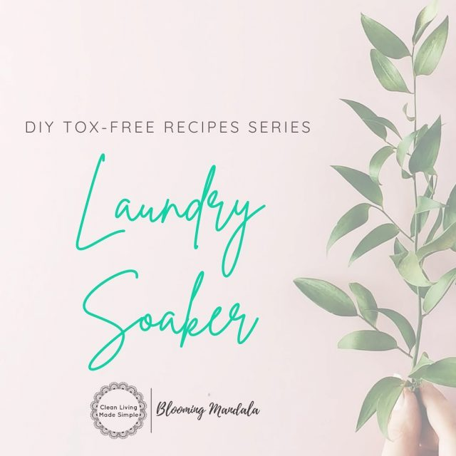 DIY TOX-FREE RECIPE SERIES - CLEANING DAY 6 - LAUNDRY SOAKER You might think making your own laundry soaker is way too complicated and it would be easier to just buy the stuff, with god knows what in it, from the shops. Well not with our 4 ingredient soaker!  PLUS one of those ingredients is essential oils and is totally optional! This sucker works well and is super duper simple and quick to whip up! Give it a whirl and let us know what you think. https://bloomingmandala.com.au/2020/05/19/diy-natural-laundry-soaker/ If you have any questions or are keen to find out more about DIY, join us and OVER 800 other wonderful DIYers in our CLEAN LIVING COMMUNITY over in Facebook (LINK IN INSTA BIO TOO) -https://www.facebook.com/groups/2475416232513135 . . . . . . . #lowtoxlife #ditchandswitch #toxinfreeliving #toxinfreehome #healthyhome #Nontoxichome #cleanproducts #greenproducts #environmentallyfriendly #diycleaning #homemade #Nontoxiccleaning  #Lowtox #lowtoxliving #cleanliving #cleanlivingmadesimple #bloomingmandala #toxfree #chemicalfree #chemicalfreeliving #diyrecipes #zerowasteaustralia #diyvanish #diylaundrysoaker #lowtoxlaundrysoaker